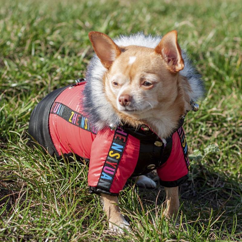 Комбинезон для собак Шерлок на тонкой подкладке (мальчик) 0